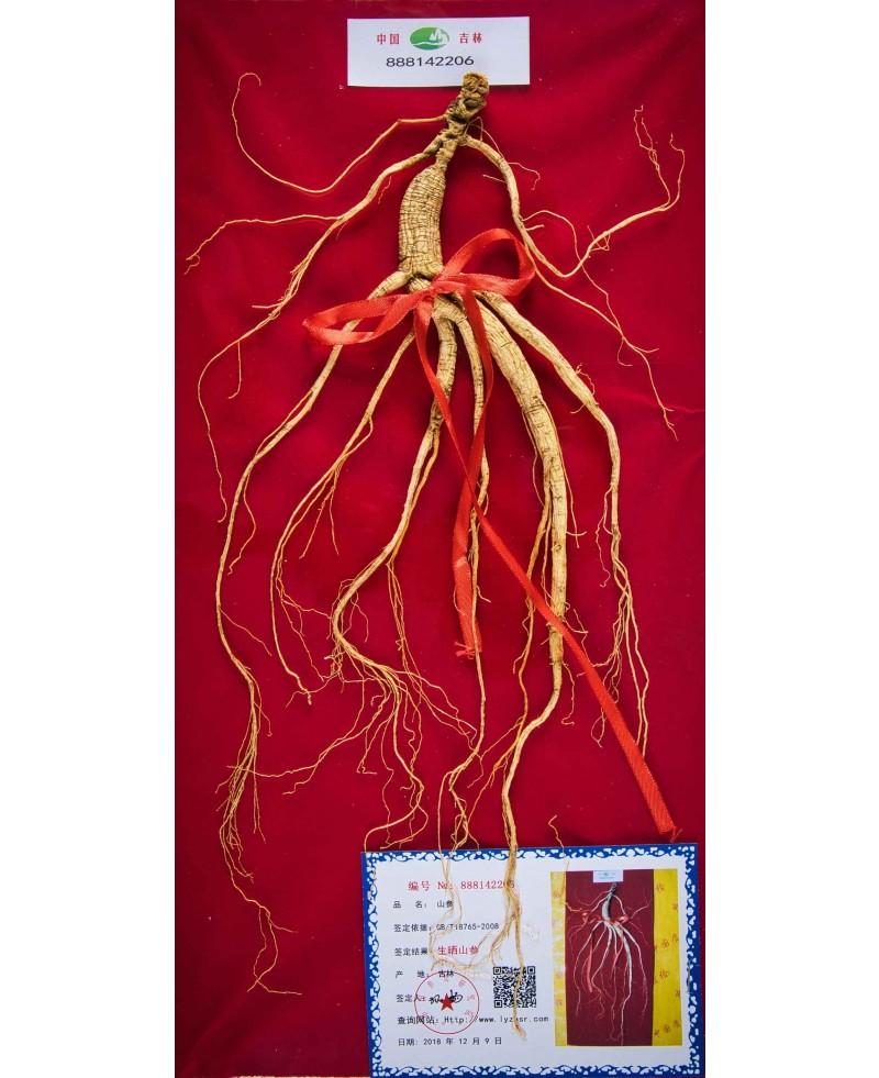 Ginseng (5-12 Years)