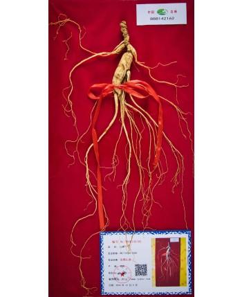 Ginseng (2-12 Years)